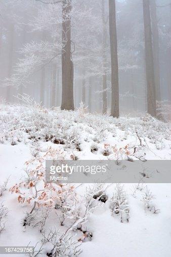 Floresta de Inverno : Foto de stock