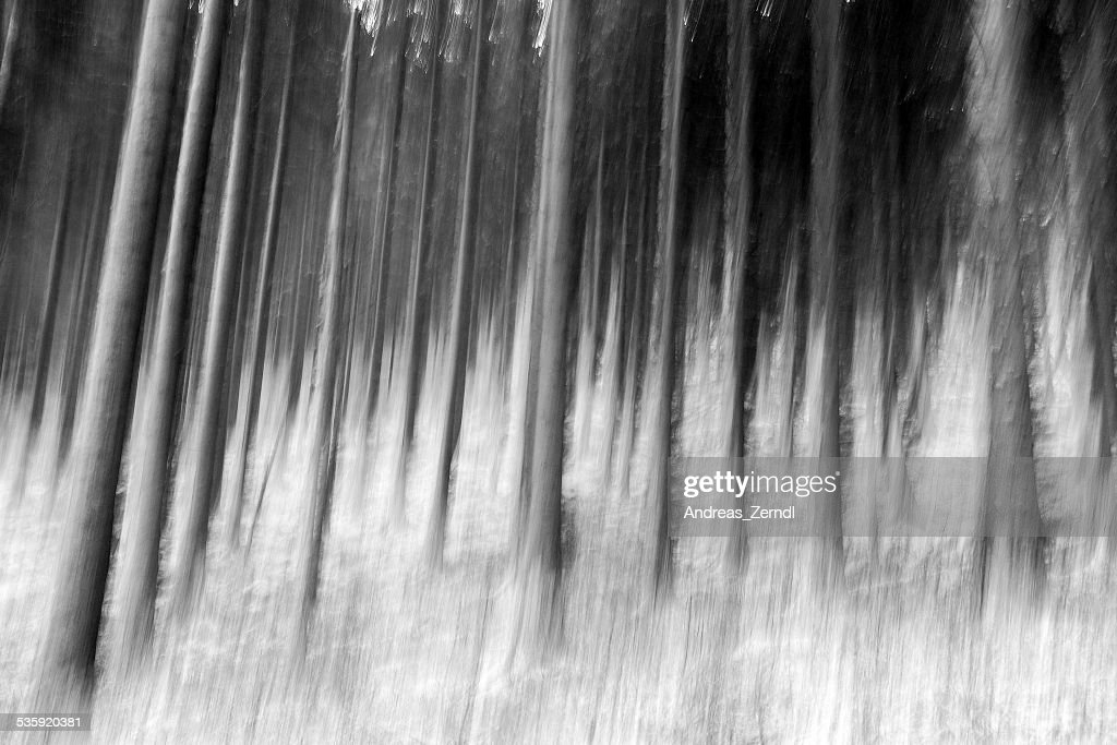 Winter Forest : Stock Photo