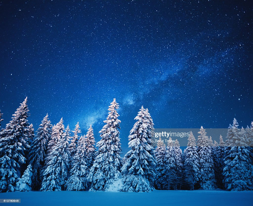 Winter Forest Under The Stars : Stock Photo