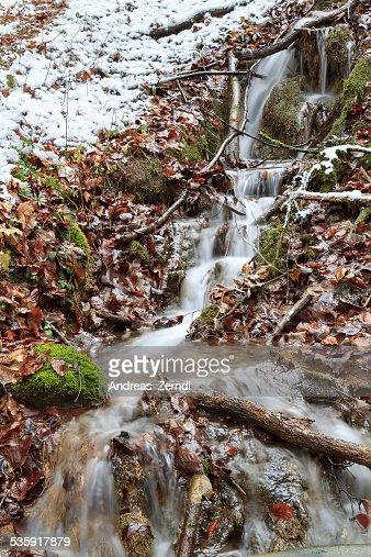 Invierno Forrest Creek : Foto de stock