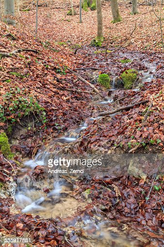 Invierno Forrest Creek : Foto de stock