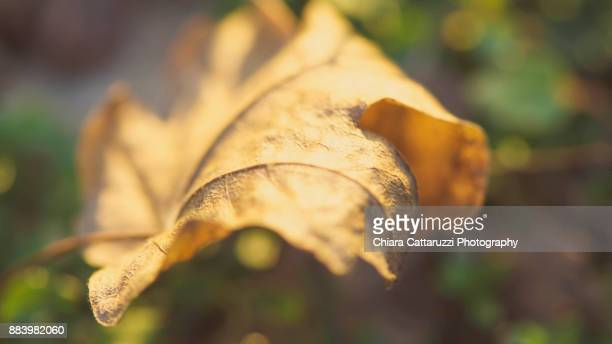 Winter golden leaf standing on a green meadow