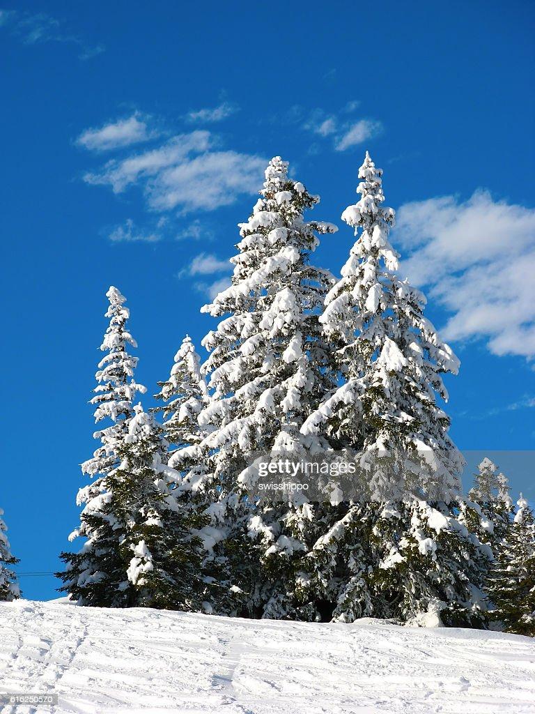 Invierno en alpes  : Foto de stock