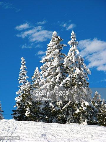 Inverno nos Alpes : Foto de stock