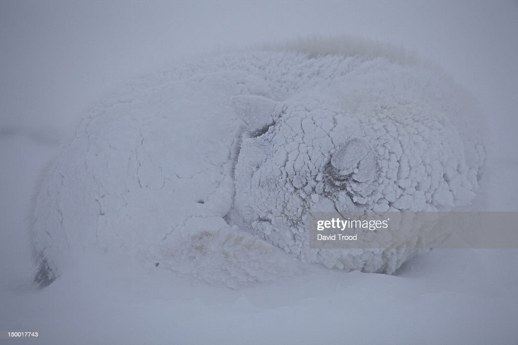 Winter in Greenland : Stock Photo