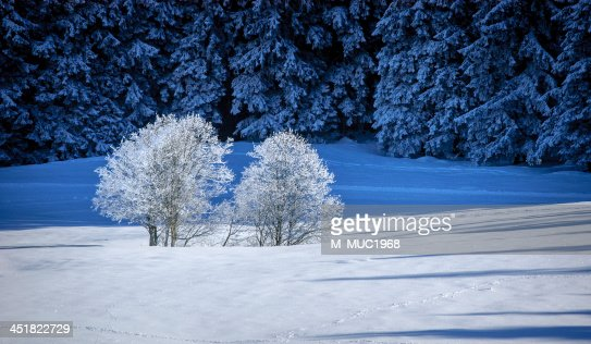 winter in the bavarian mountains : Stock Photo