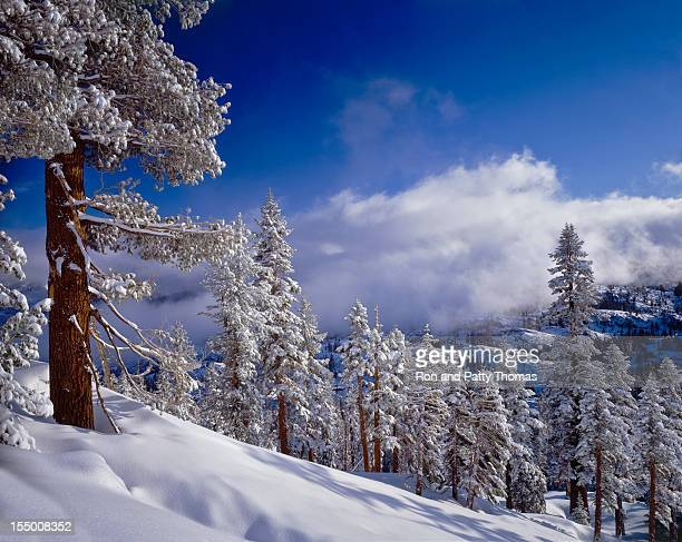 Winter in the High Sierra Mountains
