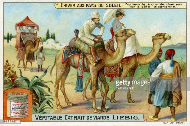 Camel ride on the Algerian coast 1910 Liebig Collectible Card