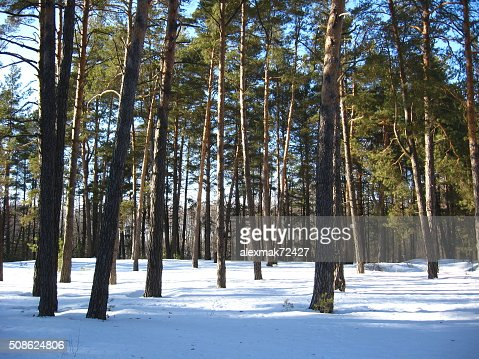 Winter landscape in the forest : Stock Photo