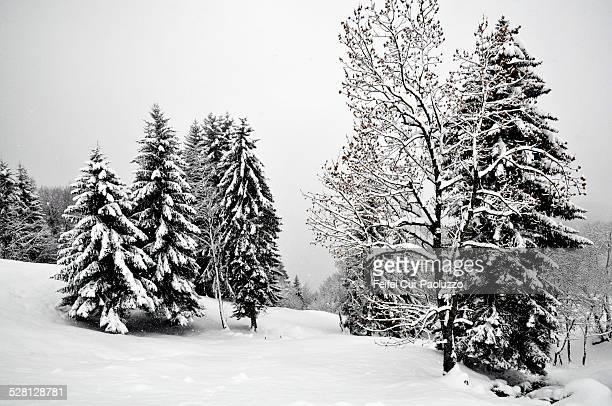 Winter landscape of Grison Switzerland