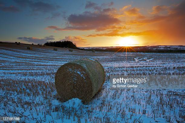 Winter Landscape of Haybales at Sunset