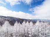 It is a freezing larch forest in Nagano prefecture.