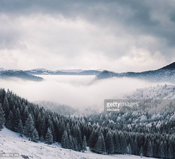 Winter landscape of mountains and frozen fir trees