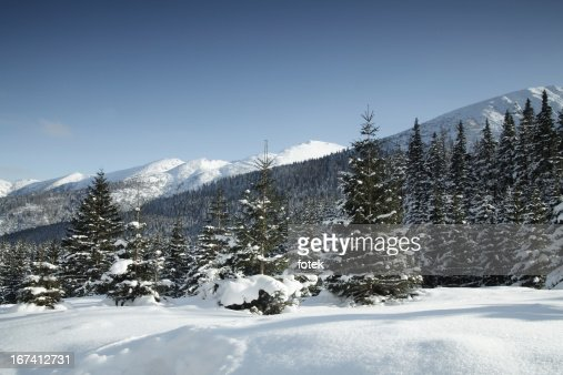Winter-Landschaft : Stock-Foto