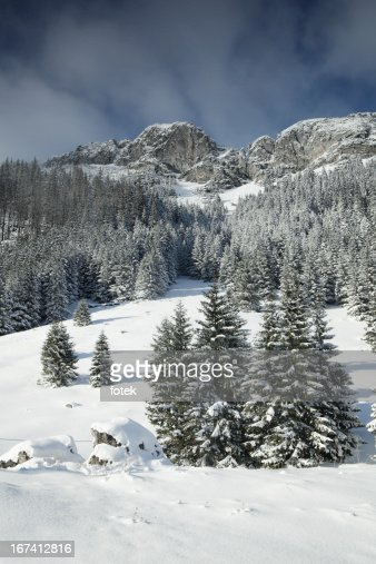 Winter landscape : Stock Photo