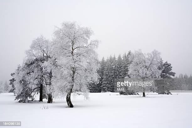 winter-Landschaft