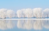 winter landscape with white trees reflecting in the water