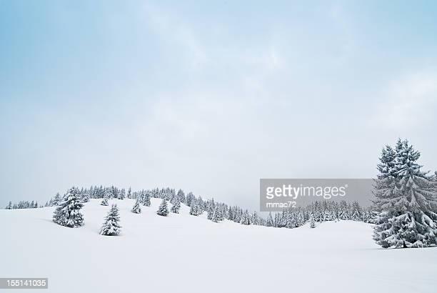 Winterlandschaft mit Schnee und Nadelbäumen aus