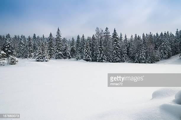 Winterlandschaft mit Schnee UND Bäume