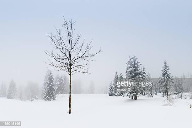 Paysage d'hiver avec la neige et arbres