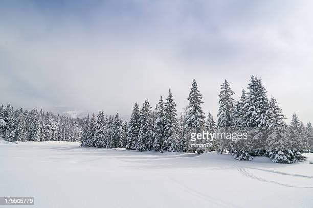 Paesaggio invernale con la neve e gli alberi