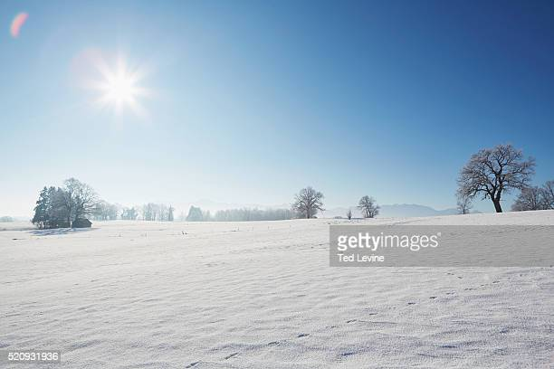 winter landscape with sunshine and snow