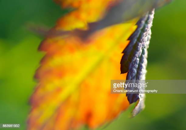 A winter leaf in a macro image