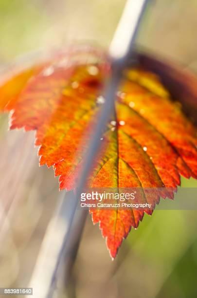 A winter leaf on a branch
