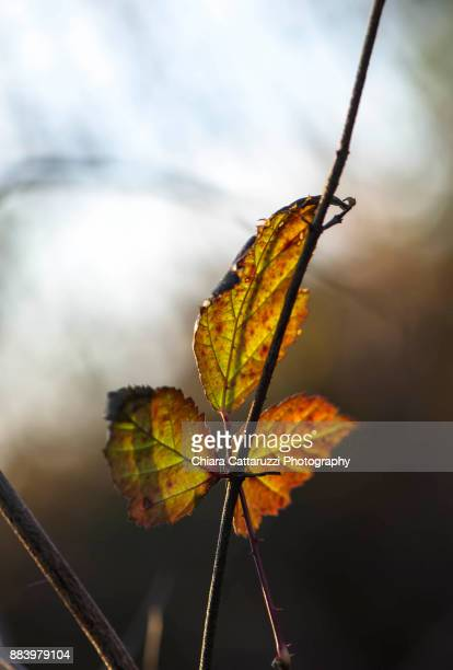 Winter leaves on a branch