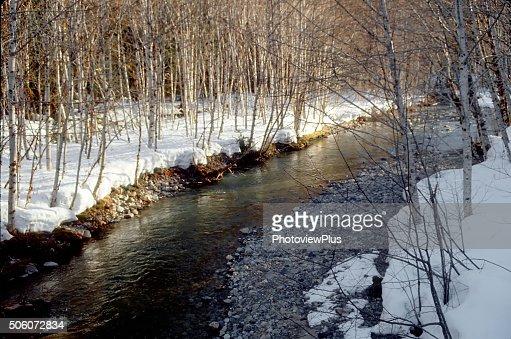 Winter Light on a Mountain Stream