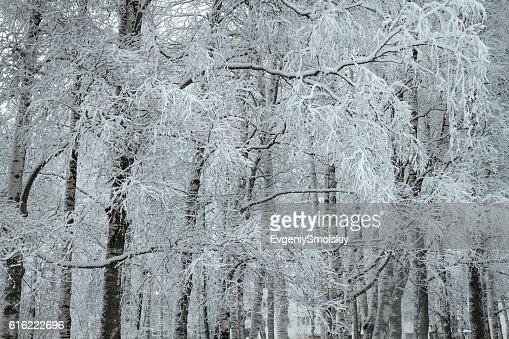 winter park : Stock Photo