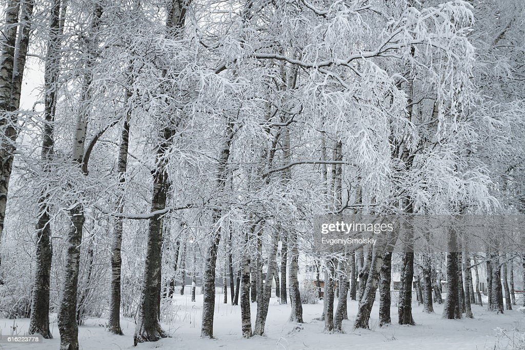 winter park : Stockfoto