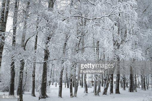 冬の公園 : ストックフォト
