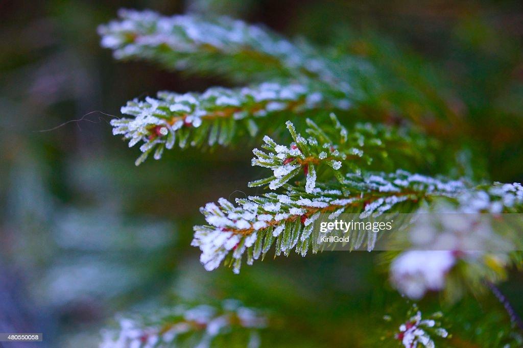 Inverno : Foto de stock
