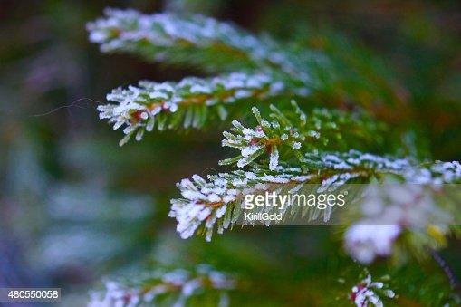 De invierno : Foto de stock