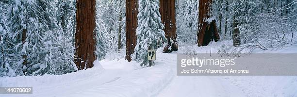 Winter Road into Sequoia National Park California