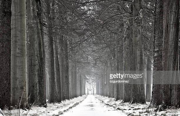 道路の裏張りで冬の木