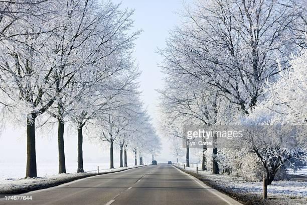 冬 road # 4