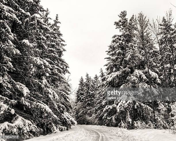 Winter road through the trees