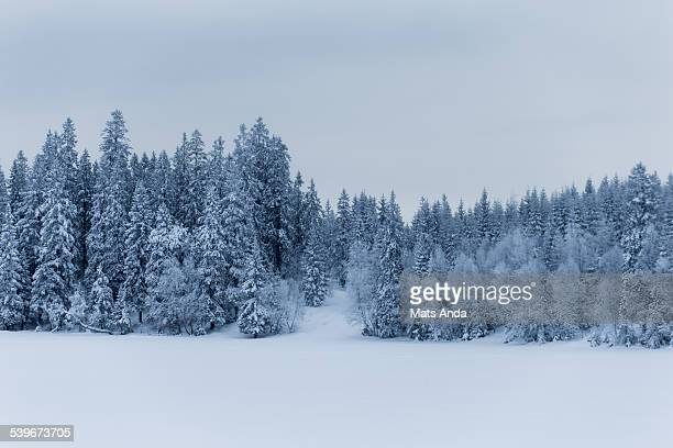 Winter scene of snowcapped trees