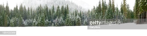 Escena de invierno (página web para montaje en PCB)