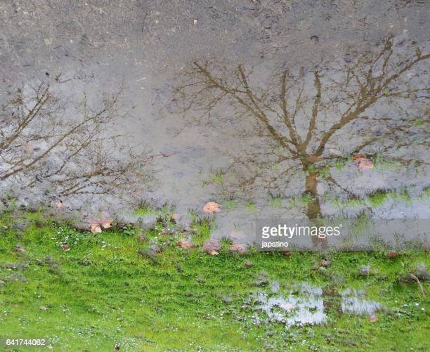 Winter scene reflected in puddle