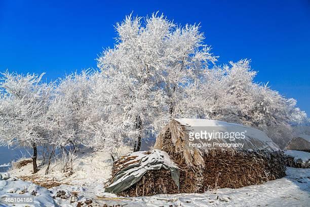 Winter Scenery in Wusong Island, Jilin China