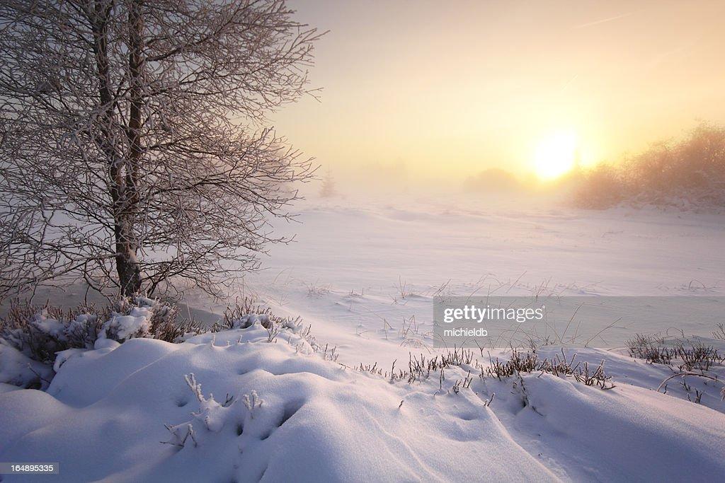 Winter scenery : Stock Photo