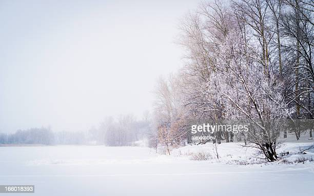 Winter scenery: snow and fog