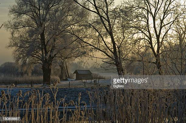 Winter scenery, trees covered with frost, Chiemgau, Upper Bavaria, Bavaria, Germany