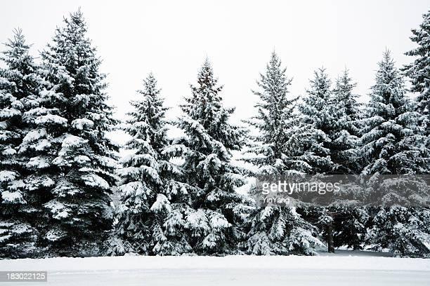 Hiver Neige sur Evergreen Pin bois forêt paysage, dans le Minnesota