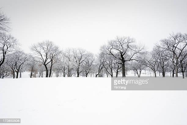 Winter Snow Treelined Landscape of Forest, Trees in Scenic Park