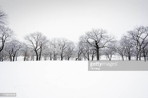 Arbolado de la nieve de invierno paisaje del bosque de árboles en el pintoresco parque