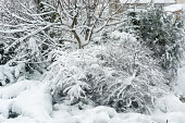 Winter, snowfall in the garden. Snow-covered garden, frosty weather.